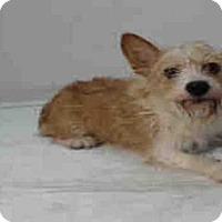Adopt A Pet :: AMAYA - Orlando, FL