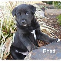 Adopt A Pet :: Rhett - Jasper, IN