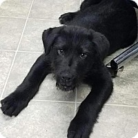 Adopt A Pet :: Lancelot-Shelter - Rustburg, VA