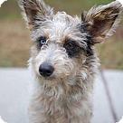 Adopt A Pet :: Betty