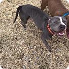 Adopt A Pet :: Cleo