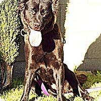 Adopt A Pet :: EBONY - San Pedro, CA