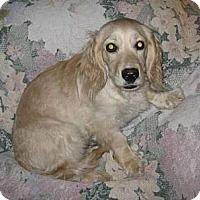 Adopt A Pet :: C.C. - Phoenix, AZ