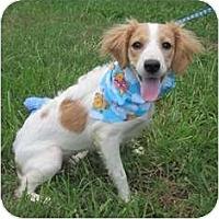 Adopt A Pet :: Lady Bug - Kingwood, TX