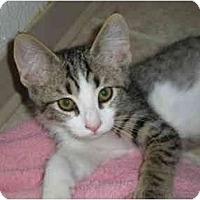 Adopt A Pet :: Horace - Davis, CA
