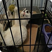 Adopt A Pet :: DJ - Pittstown, NJ
