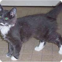 Adopt A Pet :: Aggie - Colmar, PA