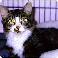 Adopt A Pet :: Nina - Medway, MA