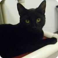 Adopt A Pet :: Sir Bentley - Hamburg, NY