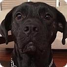 Adopt A Pet :: Rex