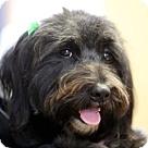 Adopt A Pet :: Julia Roberts