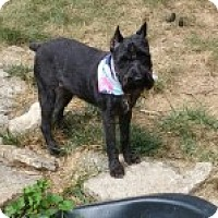 Adopt A Pet :: Hope (Adoption Pending) - Sharonville, OH
