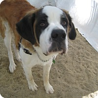 Adopt A Pet :: ROCKY - ADOPTION PENDING - Sudbury, MA