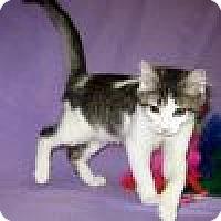 Adopt A Pet :: Zeppelin - Powell, OH