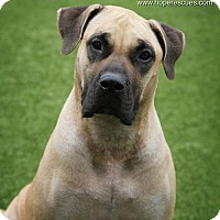 Adopt A Pet :: Shawnee - Godfrey, IL