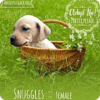 Adopt A Pet :: Snuggles - West Hartford, CT