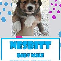 Adopt A Pet :: Nesbitt - Hanover, PA