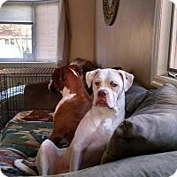 Adopt A Pet :: Casper - Courtesy Listing - Sparta, NJ