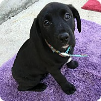 Adopt A Pet :: Amadala-Adopted! - Detroit, MI