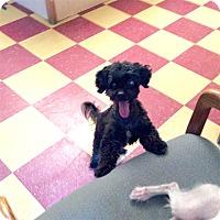 Adopt A Pet :: Parker - Tavares, FL