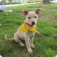 Adopt A Pet :: Willow - Randolph, NJ