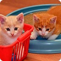Adopt A Pet :: Denver - Richmond Hill, ON