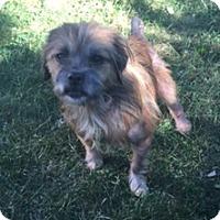 Adopt A Pet :: Casey - N. Babylon, NY