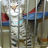 Adopt A Pet :: 47409 Hunter - Zanesville, OH