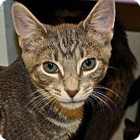 Adopt A Pet :: Bubba - Westbury, NY