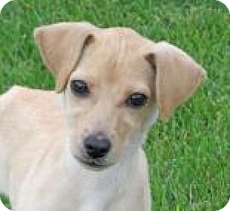 Hound (Unknown Type) Mix Puppy for adoption in Woodstock, Illinois - Molly