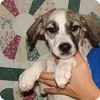 Adopt A Pet :: Harlem - Oviedo, FL