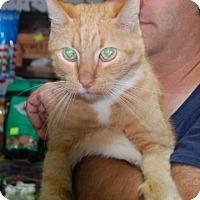 Adopt A Pet :: FallHarvest - Brooklyn, NY