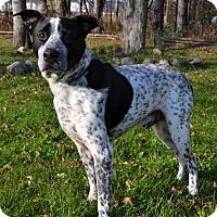 Adopt A Pet :: Chip - Michigan City, IN