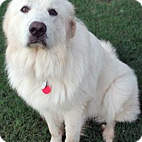 Adopt A Pet :: Tundra in OK - new! - Beacon, NY