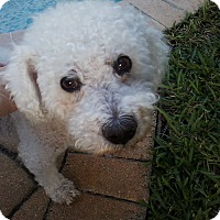 Adopt A Pet :: Ronnie - Boynton Beach, FL