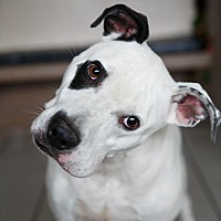 Adopt A Pet :: Patch - Marietta, GA