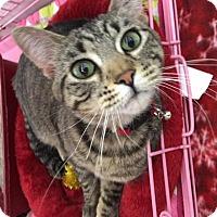 Adopt A Pet :: Wanda Louise - Roseville, MN