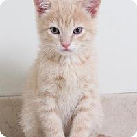 Adopt A Pet :: Johnie C170007: NO LONGER ACCEPTING APPLICATIONS - Edina, MN