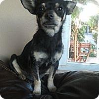 Adopt A Pet :: Bug - Tustin, CA