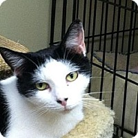 Adopt A Pet :: PEPPERMINT PATSY - MECHANICSVILLE, VA