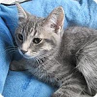 Adopt A Pet :: Luanne - Richland, MI