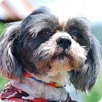 Adopt A Pet :: Benny - Providence, RI