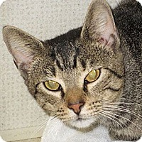 Adopt A Pet :: SERGIO - Hamilton, NJ
