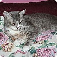 Adopt A Pet :: Cordelia - Santa Rosa, CA