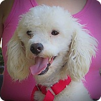 Adopt A Pet :: Lance - Long Beach, CA