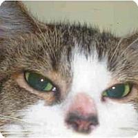 Adopt A Pet :: Rita - Summerville, SC