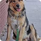 Adopt A Pet :: Jaxx von Jamen