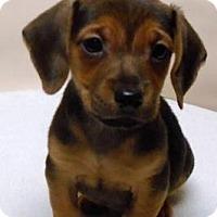 Adopt A Pet :: Monty - Gary, IN
