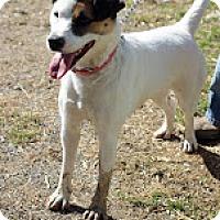 Adopt A Pet :: Dee Dee - Tinton Falls, NJ