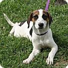 Adopt A Pet :: Maude (!!Reduced!!)